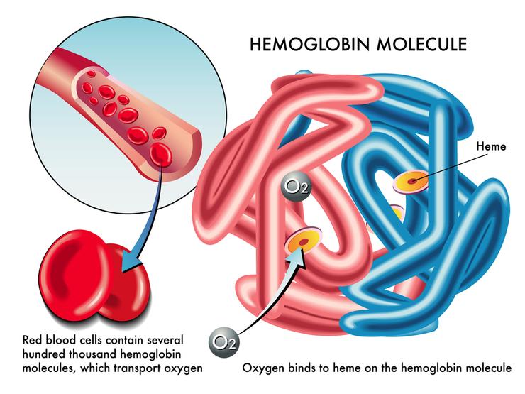 норма гемоглобина у беременных