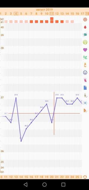Бт, овуляция и фазы цикла