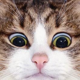 Милого котика вам в ленту