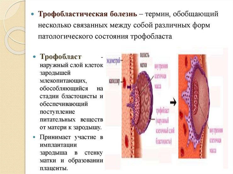 в гинекологии
