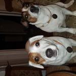 Моя банда!!!!Молли&Лиза!!!!