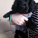 Позитивный пост про собаку-придуряку