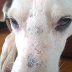 Проблема с глазом у собаки!