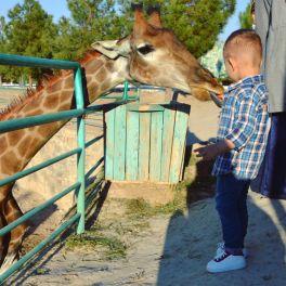 Наш очередной поход в зоопарк 🦁🐻🐯🐷🐨🦊