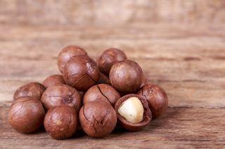Орех макадамия: польза и вред