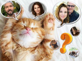 Пополнение в звездных семьях: какие котики и щеночки появились в 2020?