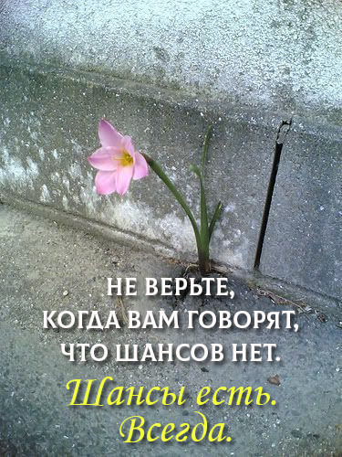 Шанс есть всегда )